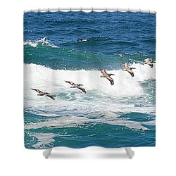 Surf And Pelicans Shower Curtain