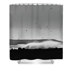 Surf Birds Shower Curtain