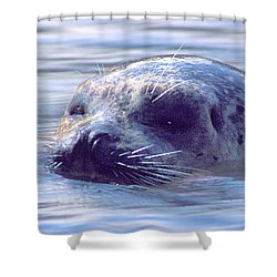 Surfacing Seal Shower Curtain