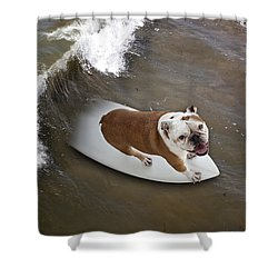 Shower Curtain featuring the photograph Surfer Dog by John A Rodriguez