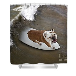Surfer Dog Shower Curtain by John A Rodriguez