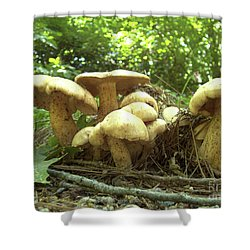 Surprise Fungi In Gibbs Garden Shower Curtain