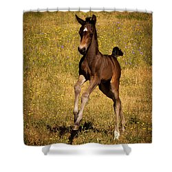 Surprise Party Shower Curtain