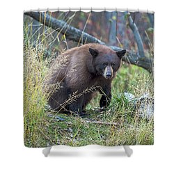 Surprised Bear Shower Curtain