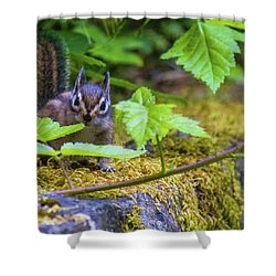 Shower Curtain featuring the photograph Surprised Chipmunk by Jonny D
