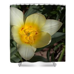Surprising Sunny Tulip Shower Curtain by Liz Allyn