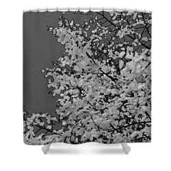 Surreal Deconstruction Of Fall Foliage In Noir Shower Curtain