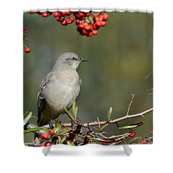Surrounded By Berries 2 Shower Curtain by Fraida Gutovich