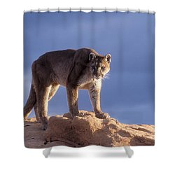 Surveying The Territory Shower Curtain by Sandra Bronstein