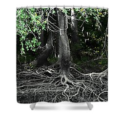 Shower Curtain featuring the photograph Survival Of The Fittest by Debra Forand