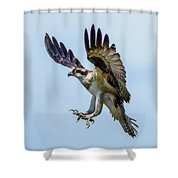 Suspended Osprey Shower Curtain
