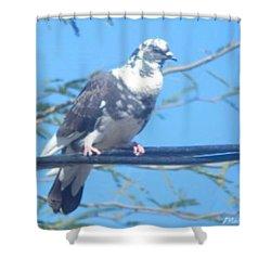 Suspicious Bird Shower Curtain