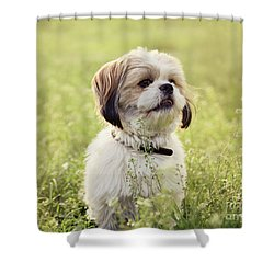 Sute Small Dog Shower Curtain