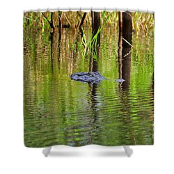 Shower Curtain featuring the photograph Swamp Stalker by Al Powell Photography USA