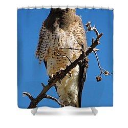 Swainson's Hawk Shower Curtain