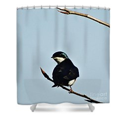 Swallow 2 Shower Curtain