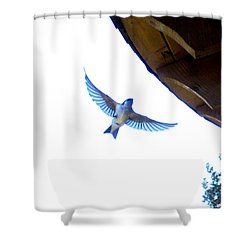 Swallow In Flight Shower Curtain