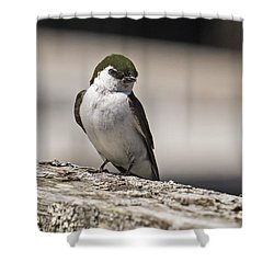 Shower Curtain featuring the photograph Swallow by Inge Riis McDonald