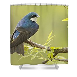 Swallow Shower Curtain by Mircea Costina Photography