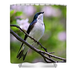 Swallow Song Shower Curtain by Christina Rollo