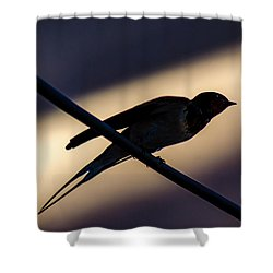 Swallow Speed Shower Curtain