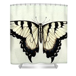 Swallow-tail Butterfly Shower Curtain by Granger