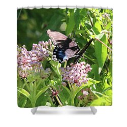 Female American Swallowtail Papilio Polyxenes Shower Curtain