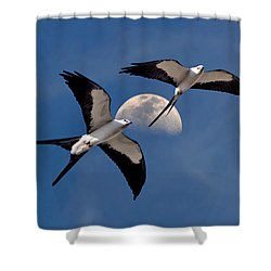 Shower Curtain featuring the photograph Swallow Tail Kites In Flight Under Moon by Justin Kelefas