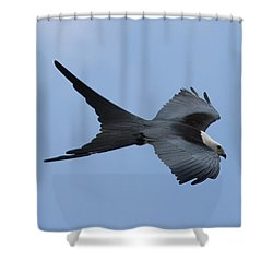 Swallow-tailed Kite #1 Shower Curtain by Paul Rebmann