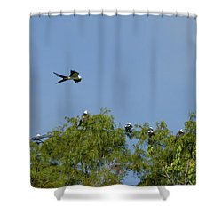Swallow-tailed Kite Flyover Shower Curtain