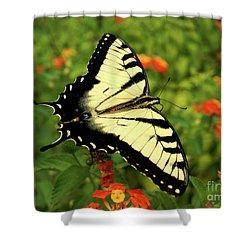 Swallowtail Among Lantana Shower Curtain by Sue Melvin