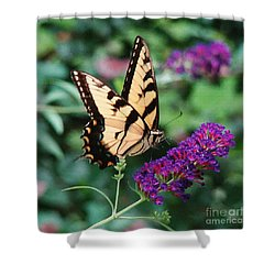 Swallowtail Butterfly 1 Shower Curtain