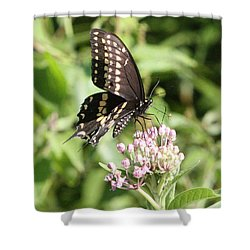 Swallowtail Butterfly 3 Shower Curtain