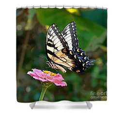 Swallowtail Butterfly 3 Shower Curtain by Sue Melvin