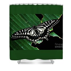 Swallowtail Butterfly- Close Shower Curtain