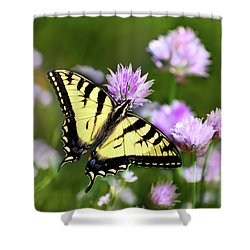 Swallowtail Butterfly Dream Shower Curtain by Christina Rollo