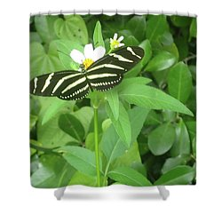 Swallowtail Butterfly On Leaf Shower Curtain