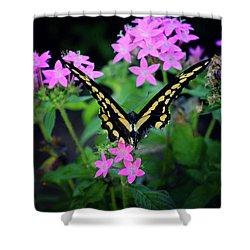 Shower Curtain featuring the photograph Swallowtail Butterfly Rests On Pink Flowers by Toni Hopper