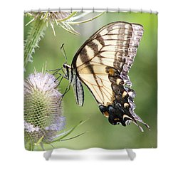 Swallowtail Delight Shower Curtain