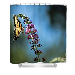 Swallowtail Lookout Shower Curtain by Judy Wolinsky