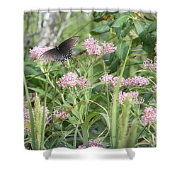 Swallowtail On Swamp Milkweed Shower Curtain