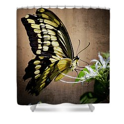 Swallowtail Shower Curtain by Saija  Lehtonen