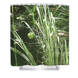 Swamp Apple Shower Curtain