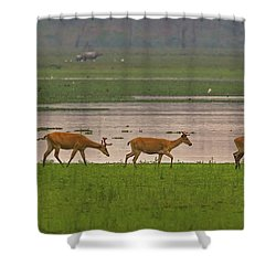 Swamp Deers Shower Curtain