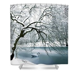 Swan A Swimming Shower Curtain