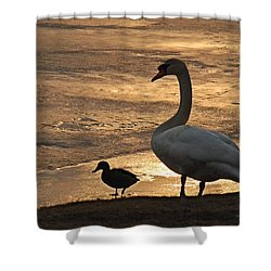 Shower Curtain featuring the photograph Swan And Baby At Sunset by Richard Bryce and Family