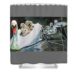 Swan And Cygnets Shower Curtain