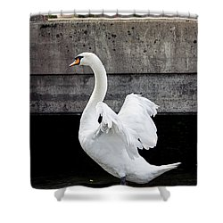 Swan At The Bridge Shower Curtain