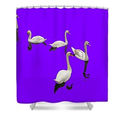 Shower Curtain featuring the photograph Swan Family On Purple by Constantine Gregory