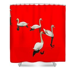 Shower Curtain featuring the photograph Swan Family On Red by Constantine Gregory
